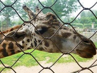 Durable Stainless Steel Zoo Mesh , animals cage Wire ropeMesh For Giraffe fencing